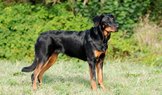 Boseron (5)